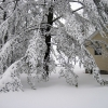 march_snow7_lowres
