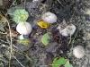 mushroom2_lowres