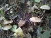 mushroom5_lowres