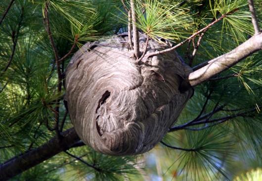 wasp_nest_lowres