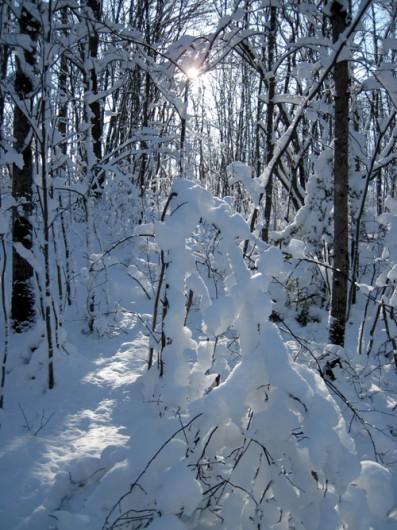snow_hunting1