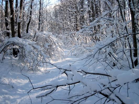 snow_hunting2