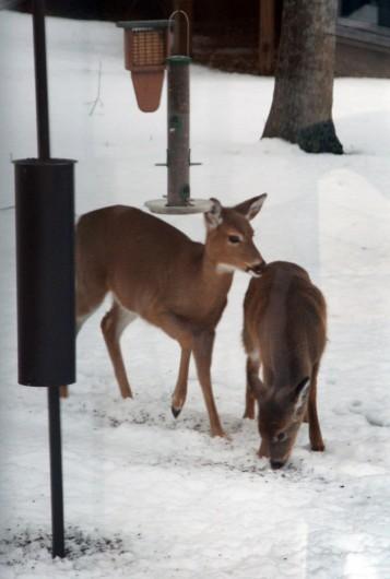 deer_feeder_vert_lowres