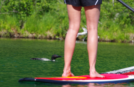 loon_paddleboard_lowres