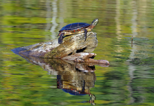 first_turtle2_lowres