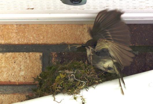 bird_at_nest_lowres