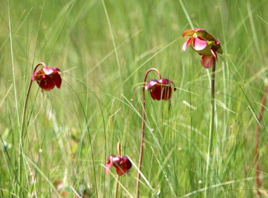 wildflowers_lowres