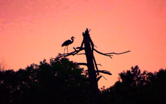 sunset_heron_lowres